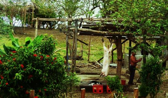 Nicaragua man cow dinner