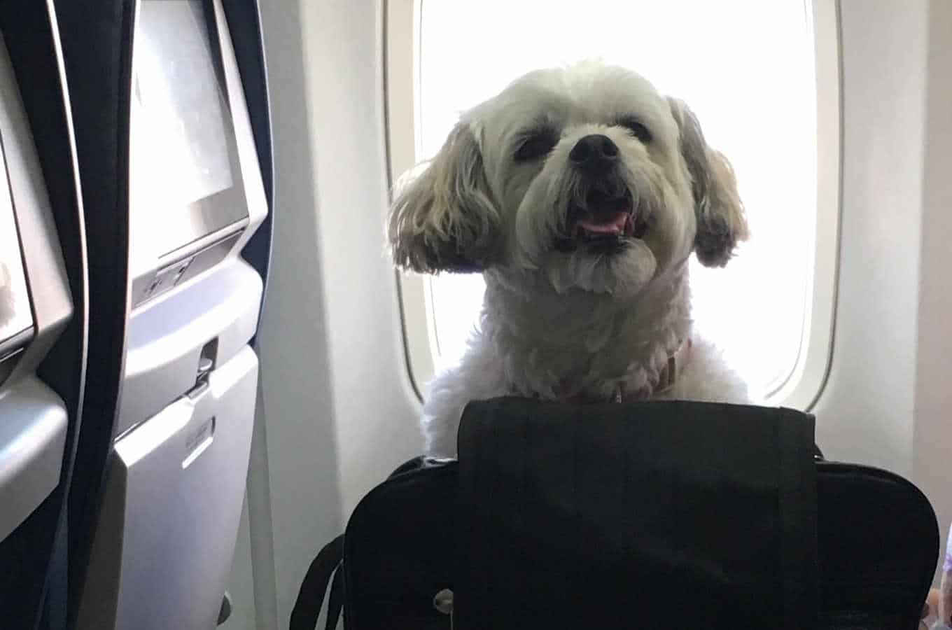 Delta Carry On Pet Fees